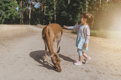 Cute and beautiful young toddler having fun, petting the animals.