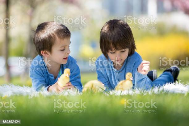 Cute little children boy brothers playing with ducklings springtime picture id869352424?b=1&k=6&m=869352424&s=612x612&h=1 9r59ftph3ym2wjkdfnp z2f3mahbv4fzi mzjmk08=