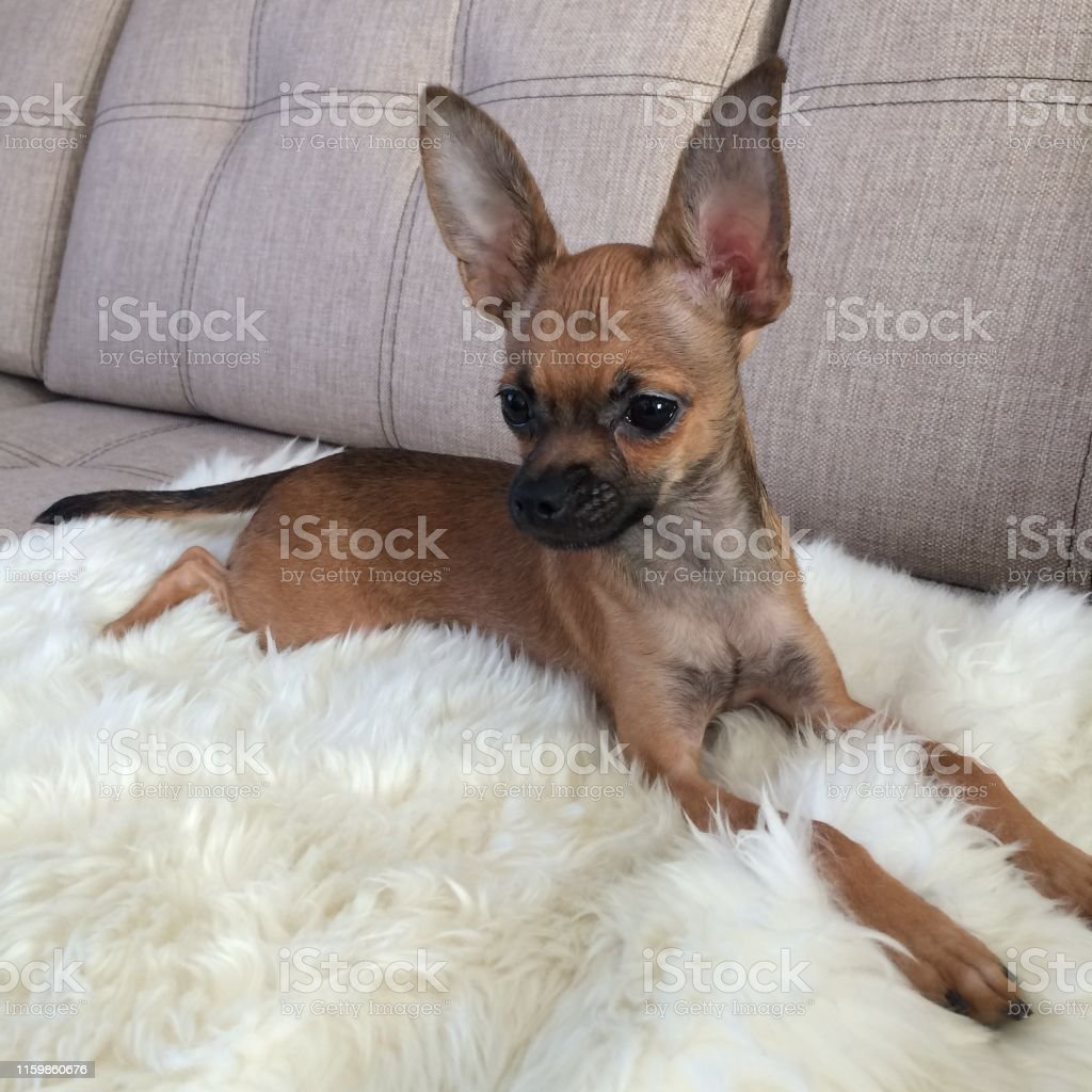 Dog grooming ebook+ free ebook download for laptop alertrecluse77.