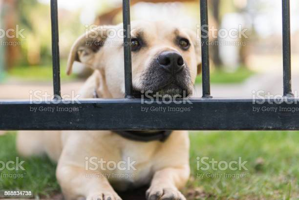 Cute little dog look through the lattice fence in the backyards picture id868834738?b=1&k=6&m=868834738&s=612x612&h=5mvxhr3 5ngrj kkbzep21d53otjga36twpg12mwzyi=