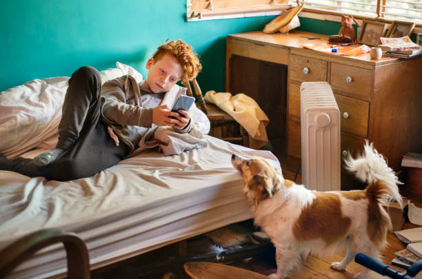 Cute little dog looking up at a boy lying on his bed at home and playing a game on his smart phone. Dog proofing the bedrooms