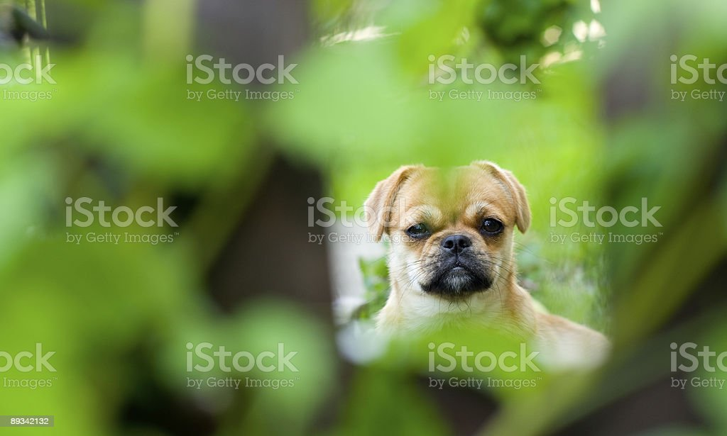 Cute little dog royalty-free stock photo