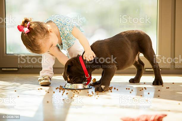 Cute little girl feeding her puppy picture id470406795?b=1&k=6&m=470406795&s=612x612&h=va5njrepulbrtr8dwi7mo87f ccqzg9lgsz8h6co2qg=