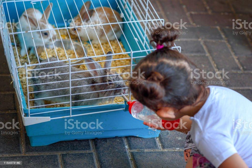 Photo Libre De Droit De Petite Fille Mignonne Alimentant Le Lapin A La Ferme Enfant En Bas Age Donner De Leau A Lanimal De Nourrir La Bouteille Deau Les Lapins Boivent A