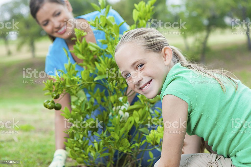 Cute little girl helping mother plant tree in public park stock photo