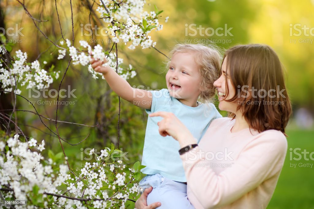 Cute little girl in the arms of her beautiful mother in cherry or apple orchard during flowering. Easter. stock photo