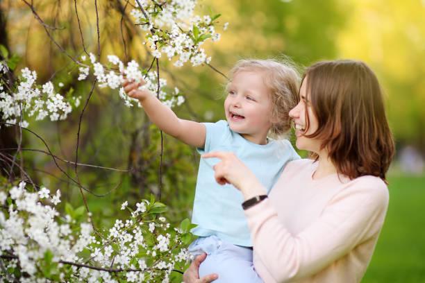 Niña linda en los brazos de su hermosa madre en huerta de la cereza o de manzana durante la floración. Semana Santa. - foto de stock