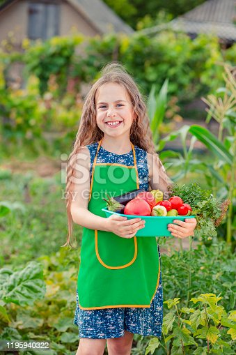 Cute little girl in the garden with a crop of ripe vegetables. The girl collects a crop of ripe organic tomatoes in the garden.