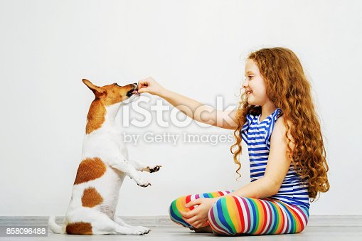 885056264istockphoto Cute little girl is training the dog jack russel terrier. 858096488