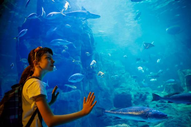 Cute little girl looking at undersea life in a big aquarium stock photo