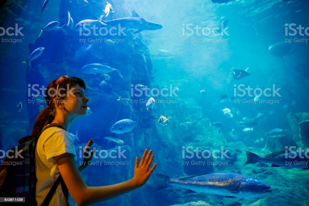 Cute little girl looking at undersea life in a big aquarium stock photo