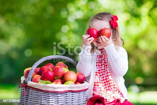 istock Cute little girl picking apples in fruit orchard 487309846