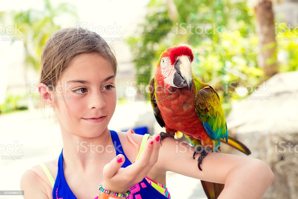 Cute little girl playing with a Scarlet Macaw Parrot stock photo