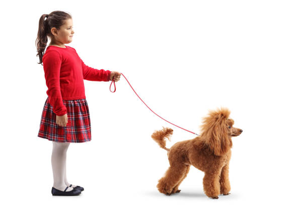 Cute little girl with a red poodle dog on a leash picture id1137040434?b=1&k=6&m=1137040434&s=612x612&w=0&h=x6lxbalqp6aoqq7dmsblbabq1rsnqfqryqpd wxno m=