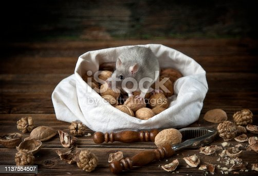 istock Cute little gray mouse, rat sits in a bag of walnuts and nutcracker. Still life in vintage style with a live rat. Chinese New Year symbol 1137554507