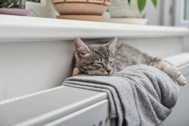 Niedlichen kleinen grauen Kätzchen – Foto