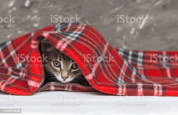 Cute little kitten looks out from under red warm plaid close up copy picture id1023330538?b=1&k=6&m=1023330538&s=612x612&h=oi1znznbalbfkyb8kzewcfz8ulko oehefskfeycbo8=