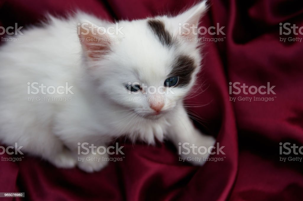 Cute little kitten on the purple satin cloth zbiór zdjęć royalty-free