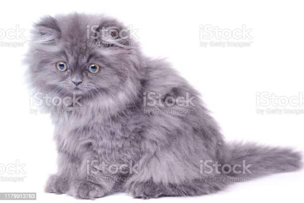 Cute little kitten picture id1179913763?b=1&k=6&m=1179913763&s=612x612&h=3qewr2wxqsgmwchi9pacb0pkvodusazjblyapoagytq=