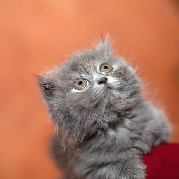 Adorable petit chaton. - Photo