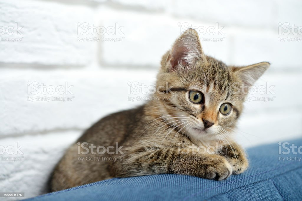 Cute little kitten Lizenzfreies stock-foto
