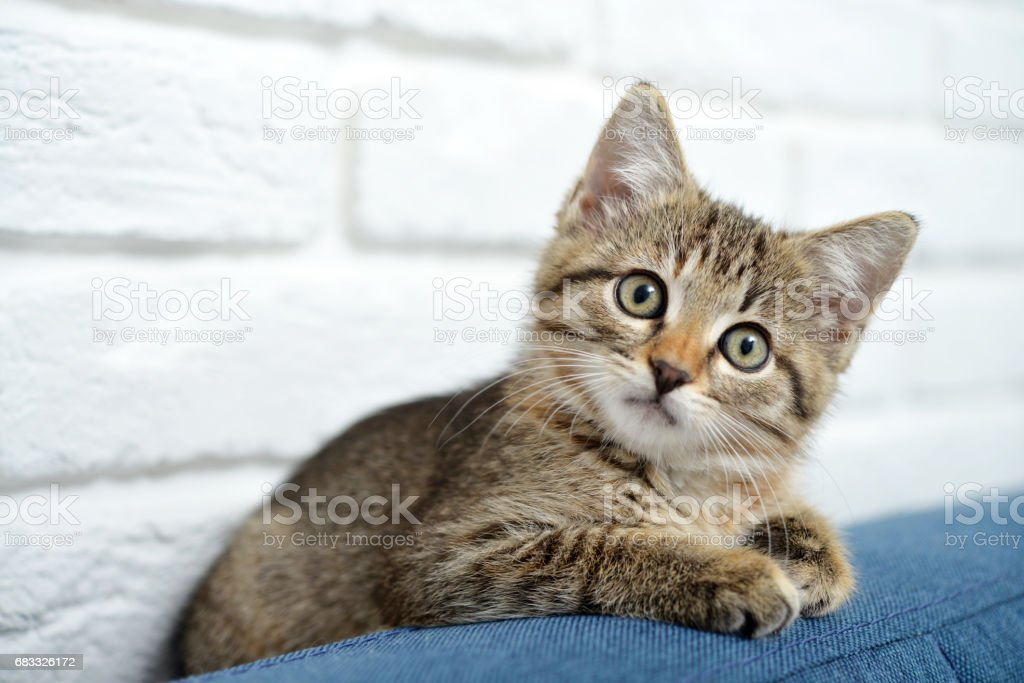 Cute little kitten royalty-free stock photo
