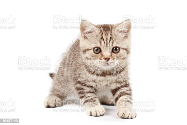 Cute little kitten picture id89157143?b=1&k=6&m=89157143&s=612x612&h=8ism1i0wz7jwddoktxqbihvn6witpoxadgkuuc xroo=