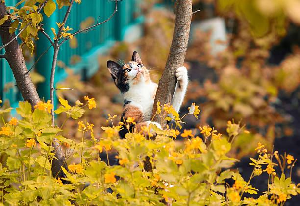 Cute little kitten playing in the autumn garden picture id602334498?b=1&k=6&m=602334498&s=612x612&w=0&h=mhtad6trwt7ujamad9ihjov5mz mikxsb5d5m eg18a=