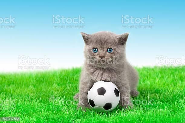 Cute little kitten playing soccer picture id502117833?b=1&k=6&m=502117833&s=612x612&h=sur67byfdchw 8npzkvbndvkpdks4iilpi x436tpms=