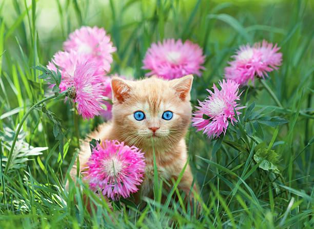 Cute little kitten sitting in flower meadow picture id462019421?b=1&k=6&m=462019421&s=612x612&w=0&h=9z 95wpcqwwg4jl6 qrxpc0dgcpwdguw1dd7yeuvjpc=