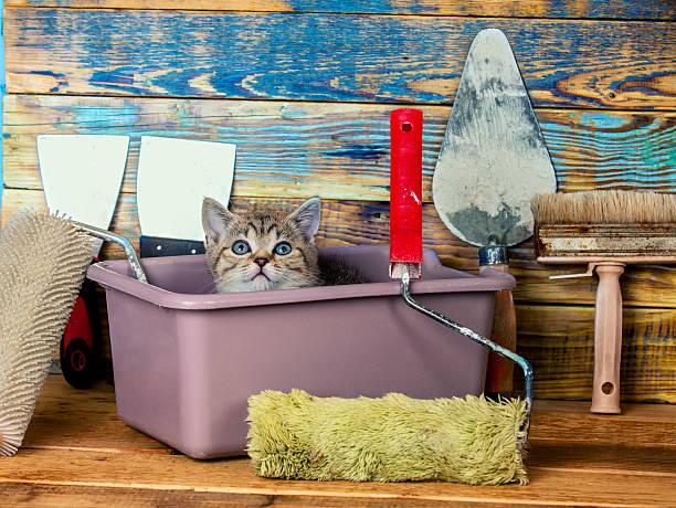 cute little kitten sitting together in washbowl - hundezubehör diy stock-fotos und bilder