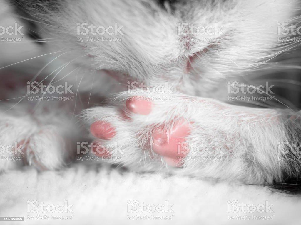 A cute little kitten sleeps on a white carpet on sun. Cute sleeping kitty close-up stock photo
