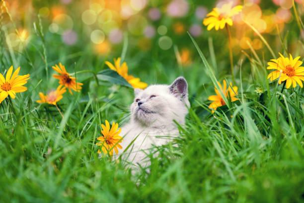Cute little kitten walking on the floral lawn picture id856137390?b=1&k=6&m=856137390&s=612x612&w=0&h=zjpo9c4nms1smv0qikczu cx9q99wjgcbyfyvznjnpc=