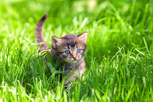 Cute little kitten walking on the grass picture id483107394?b=1&k=6&m=483107394&s=612x612&w=0&h=b5bmbb3c6epn of j5k4g4bhuk30j2boyknyknvit6m=