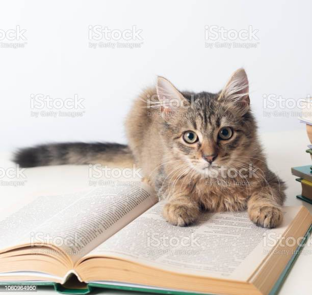 Cute little kitten with books on white background picture id1060964950?b=1&k=6&m=1060964950&s=612x612&h=94audul9lx wxfo4 wkioueydc7r1m42fnct7cjkvou=