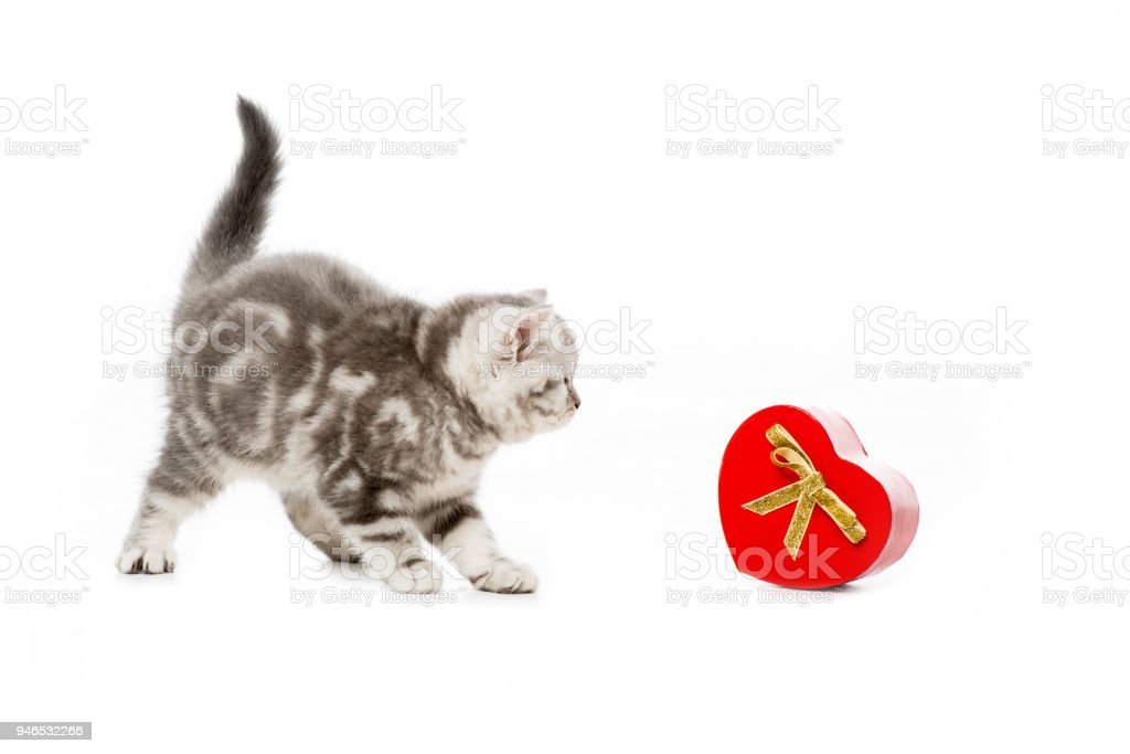 cute little kitten with heart shaped gift isolated on white stock photo