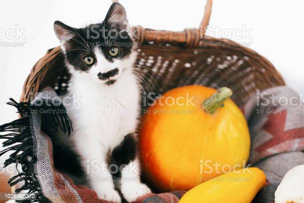 Cute little kitty sitting in wicker basket with pumpkin zucchini and picture id1028986372?b=1&k=6&m=1028986372&s=612x612&h=q44aofe4dfre4e4g5dykadyg1ptftweqvgk7udszpa0=