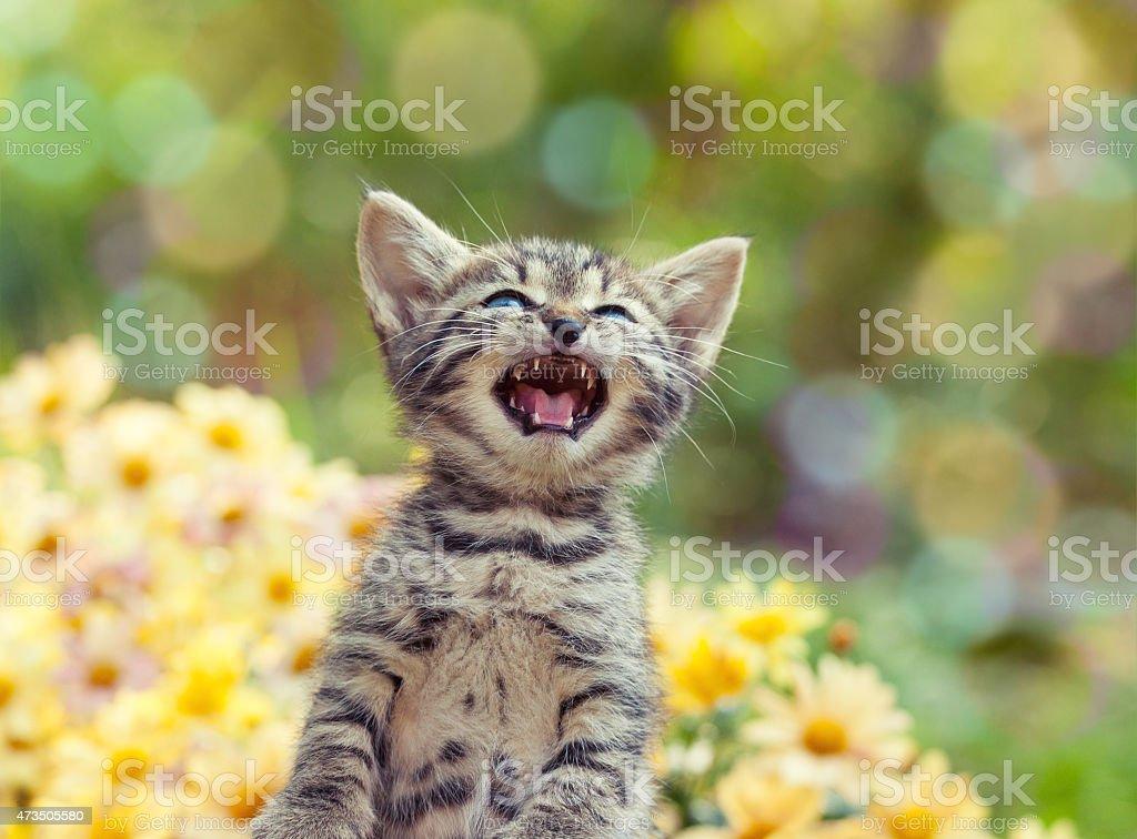 Niedliche kleine Kätzchen Miauen, im Garten – Foto