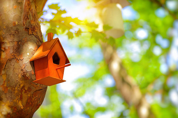 Cute little nesting box stock photo