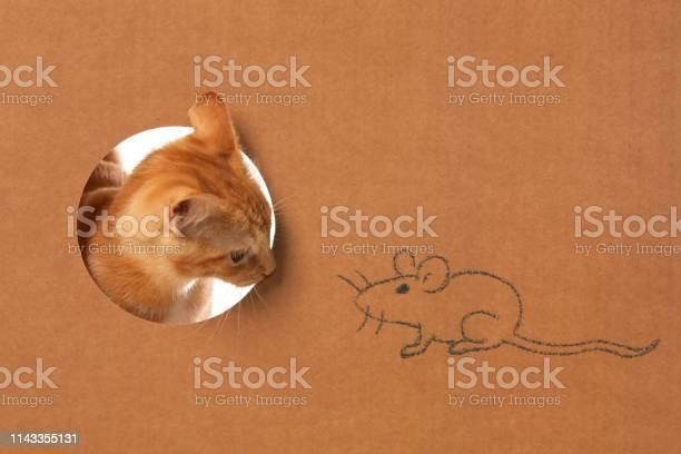 Cute little orange tabby kitten in a cardboard box playing with a picture id1143355131?b=1&k=6&m=1143355131&s=612x612&h=dx77wl7nbszg i8ithqt svdb00n2jfhiwjh1probt8=