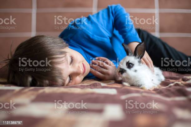 Cute little preschool boy playing with pet rabbits at home picture id1131389797?b=1&k=6&m=1131389797&s=612x612&h=rabmfdu2i2jvmteqwplpncqhhb7oou4zac8gs1bwpk8=