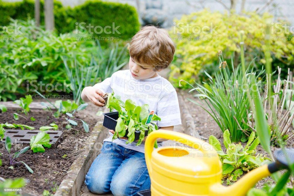 Niedlich kleine Vorschule Kind junge Pflanzen grüner Salat Sämlinge im Frühjahr – Foto