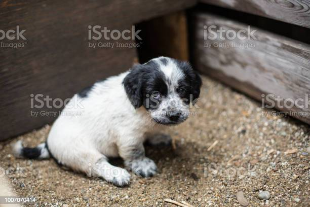 Cute little puppy in a wooden box is asking to be adopted with hope picture id1007070414?b=1&k=6&m=1007070414&s=612x612&h=xvvt3cfpzcthy60fs0cclcmyxn4jcuydtzstkizsafy=