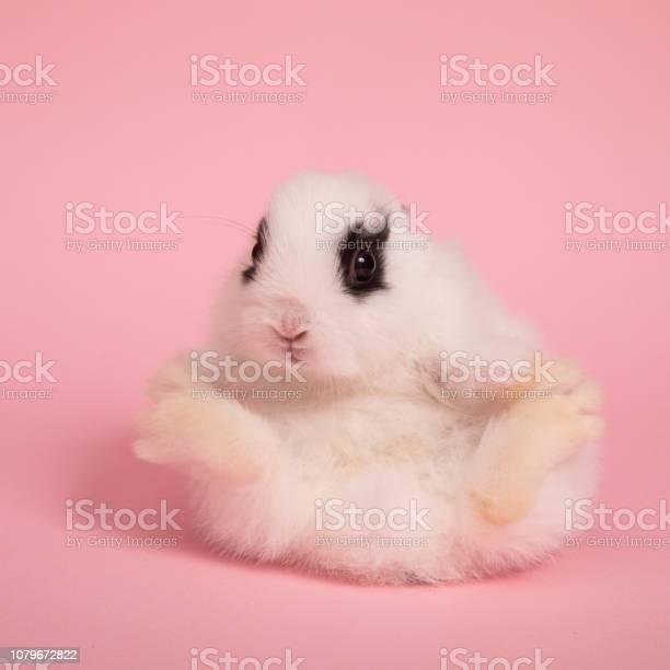 Cute little rabbit picture id1079672822?b=1&k=6&m=1079672822&s=612x612&h=ytsvdk8fq8sst tqyb5byzeaps2zqidylng t q9  w=
