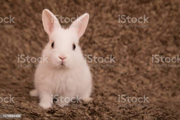 Cute little rabbit picture id1079694456?b=1&k=6&m=1079694456&s=612x612&h=ivvqepplxipc6etlvo6vjleg08ouoqlmfb d2lopleu=