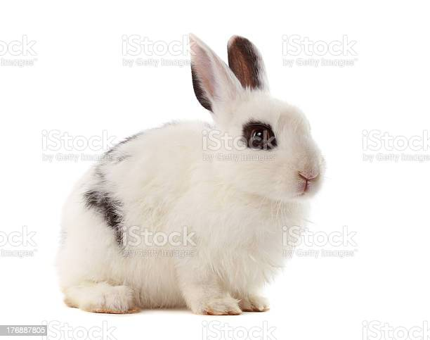 Cute little rabbit picture id176887805?b=1&k=6&m=176887805&s=612x612&h=n5 9x7or6dcw93gr1nf 1q6qz1q3skudun5syr shig=