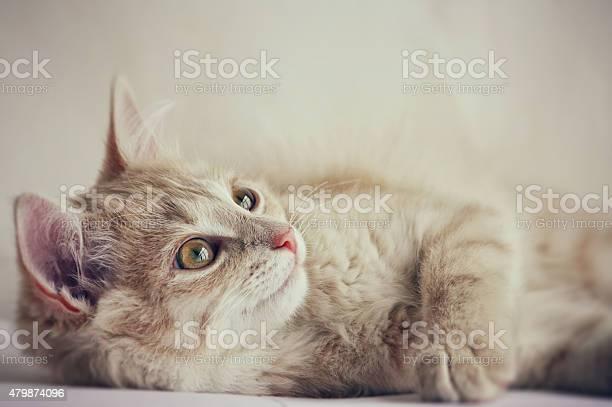 Cute little red kitten picture id479874096?b=1&k=6&m=479874096&s=612x612&h=au grw62jyl1tjunyw ftgo8e 9bsc a3eu5kmxxqz0=