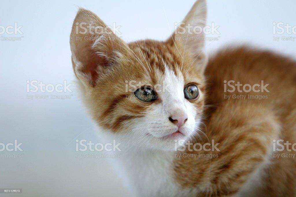 Cute little red kitten royalty-free stock photo