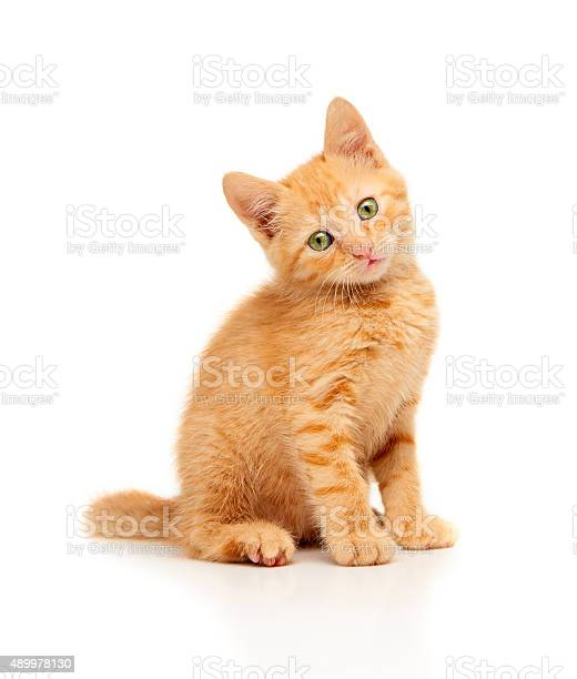 Cute little red kitten sitting and looking straight at camera picture id489978130?b=1&k=6&m=489978130&s=612x612&h=ljmezhnxvbalgokk9oby lfnb5qw3zsrn53bilz  9c=