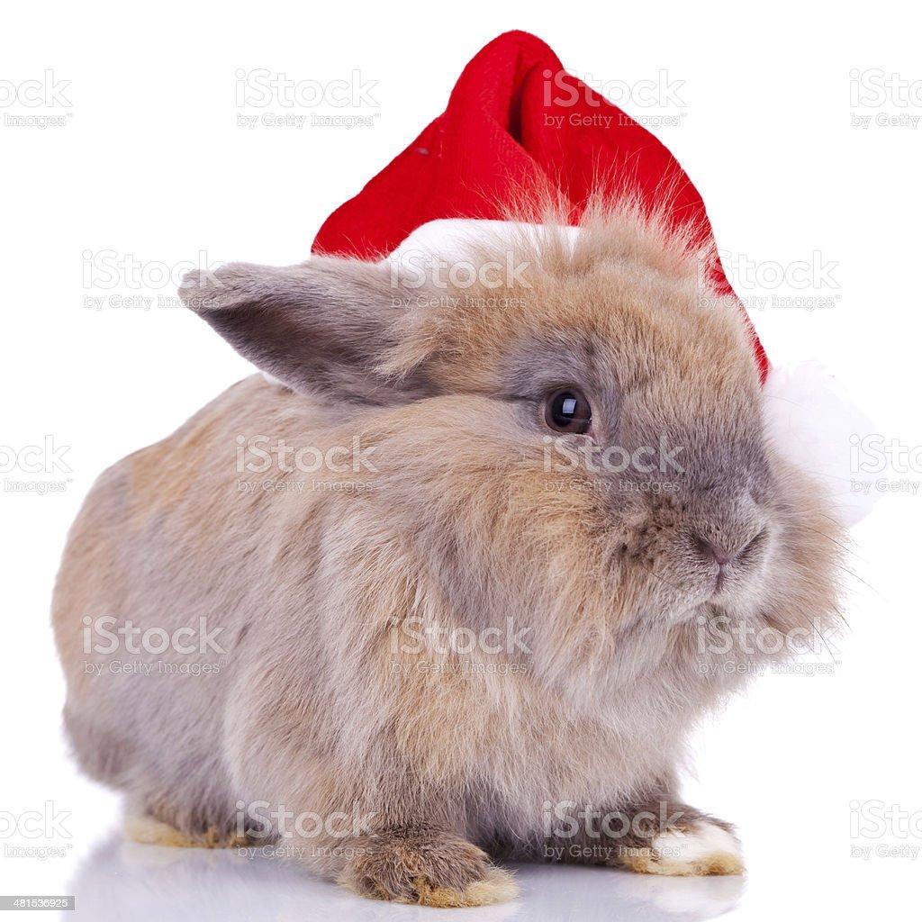 cute little santa bunny royalty-free stock photo